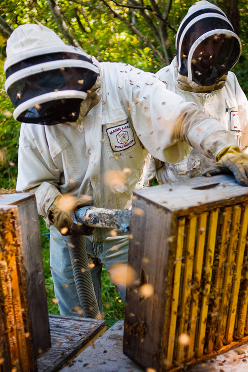vermont photographer beekeepers harvesting honeycomb