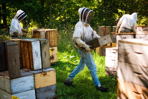 vermont photography beekeepers harvesting honeycomb