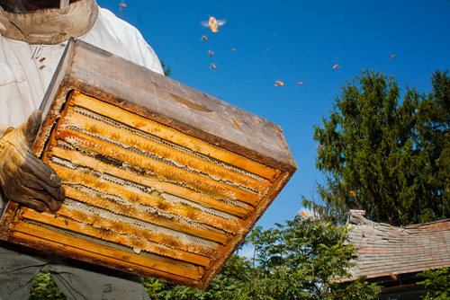 vermont photographers | beekeepers harvesting honeycomb